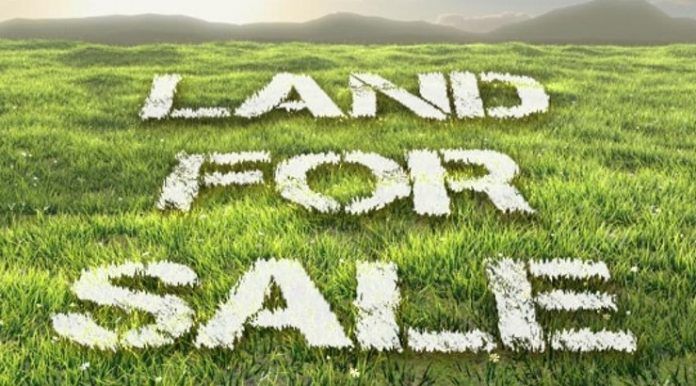 Masterpiece guide to avoid fraudsters when buying land in Kenya